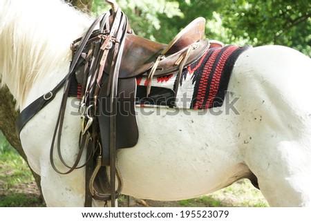 White horse with saddle - stock photo