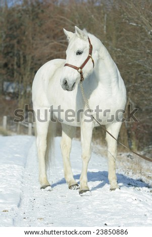 White horse with snow