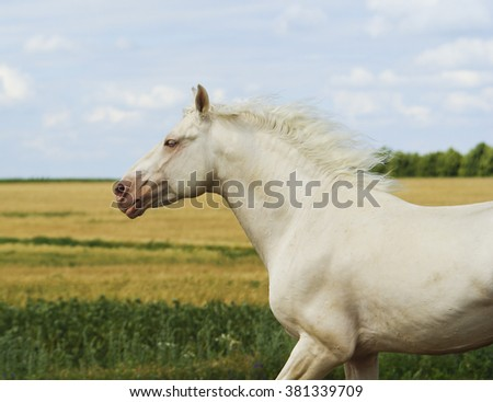 white horse with white mane running on the field