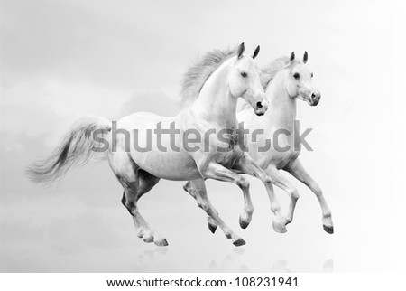 white horses - stock photo