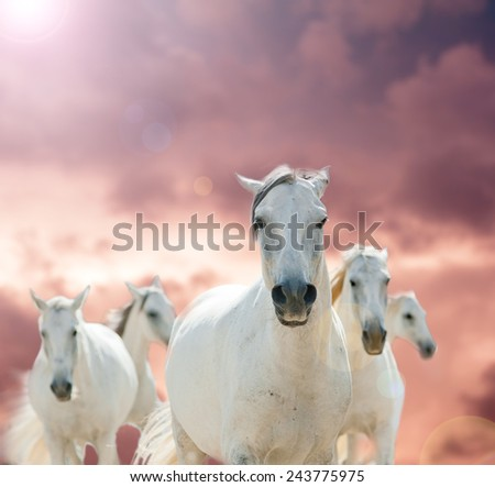 white horses against the cloudy skies - stock photo