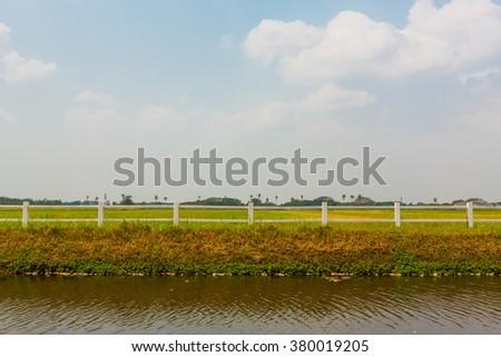 White horses fence in farm field - stock photo