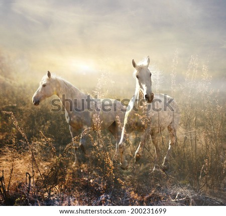 white horses gallop among grasses