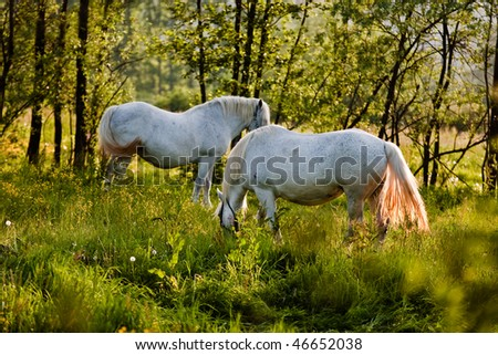 White horses grazing on a green field - stock photo