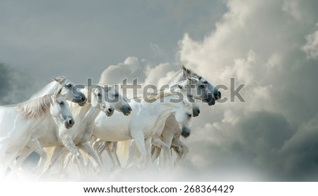 White horses running with skies on the background