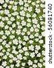 White japanese anemone. Background - stock photo