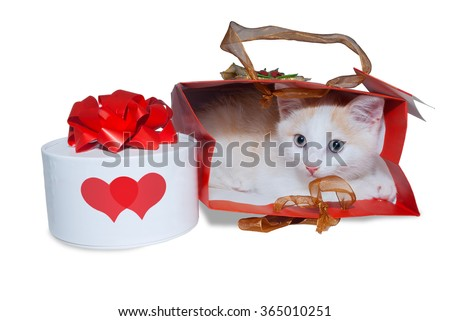 White kitten in a bag and a box with a gift. White box with two red hearts. - stock photo