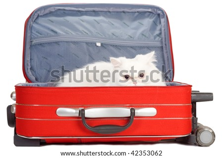 white kitten in the red suitcase - stock photo