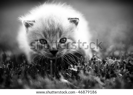 White kitten on a green lawn. Selective focus. - stock photo