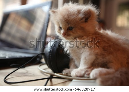 Fancy Cat Playing With Wires Model - Electrical Diagram Ideas ...
