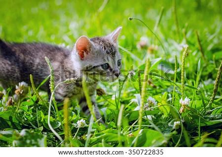 white kitten walking on the grass in park - stock photo