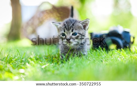 white kitten with no-name camera, focus on cat