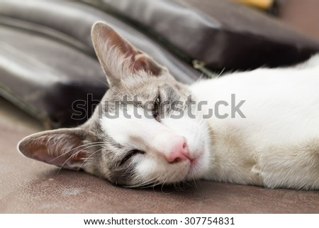 White Kitty take a nap with the comfy face - stock photo