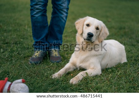 white Labrador Retriever lying on the grass near the feet of the master