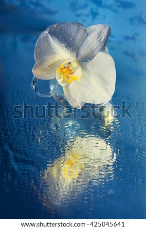 White largest single orchid flower. hudozhetsvennoe photo. in a glass cup all covered with drops on a blue background beautiful. bottom blue background covered with water droplets,  - stock photo