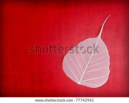 White Leaf Skeleton on Red Grunge Background with Copy Space - stock photo