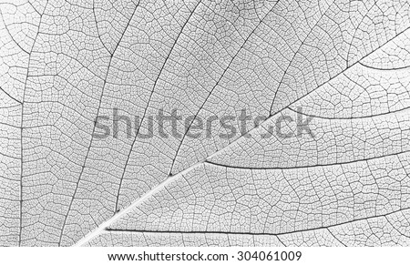 white leaf texture - stock photo