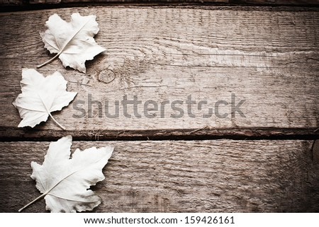 white leaves on wooden background - stock photo