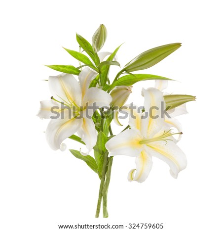 White lilies ' bunch isolated   on a white background - stock photo