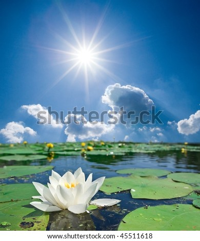 white lilly under a sparkle sun - stock photo