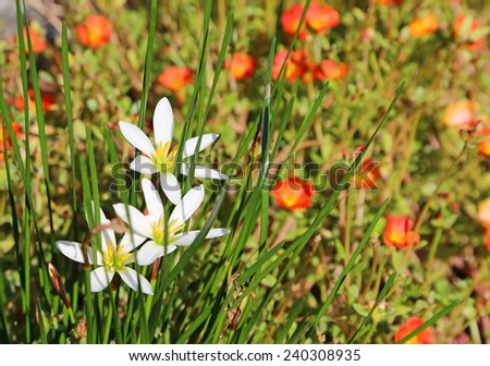 White lily among stalks - stock photo