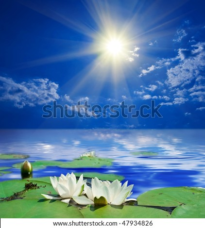 white lily by a sunny day - stock photo