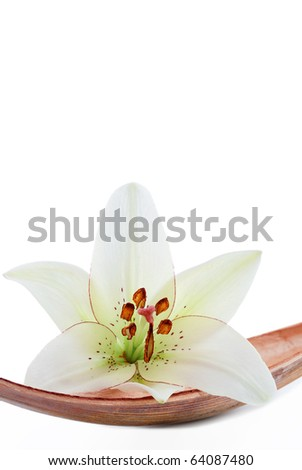 White lily flower set on a dried coco leaf, isolated on white - stock photo
