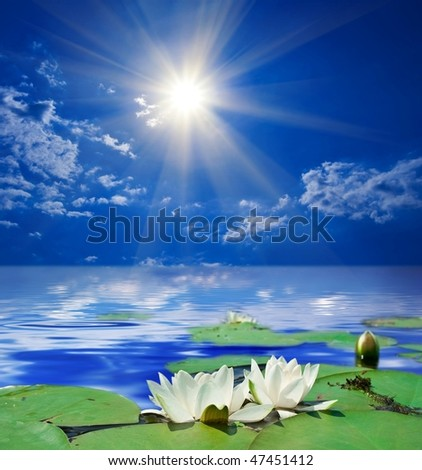 white lily in a rays of sun - stock photo