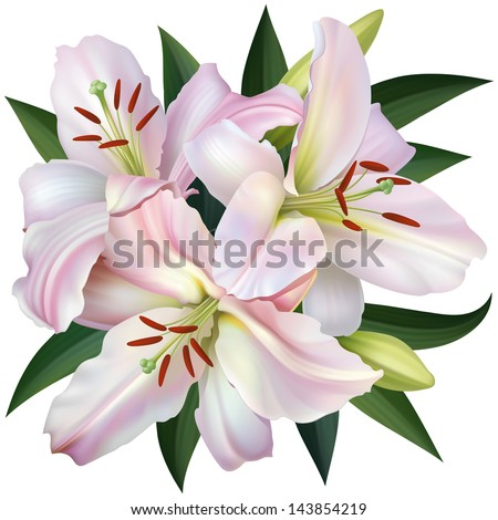 White Lily Isolated on White Background. Rasterized Version - stock photo