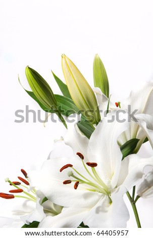 White Lily with a white background - stock photo