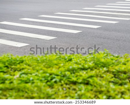White lines for a pedestrian crossing painted on a road running diagonally away from the camera with a green leafy foreground - stock photo