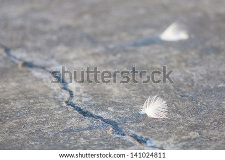 White little feather on concrete, background for an inscription. - stock photo