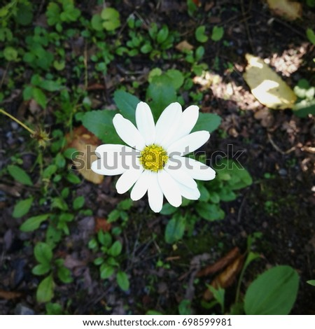 White little flower yellow stem on stock photo royalty free white little flower yellow stem on herbal background mightylinksfo
