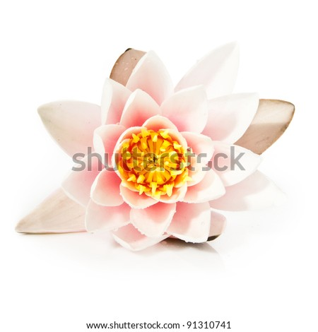 white lotus closeup - stock photo