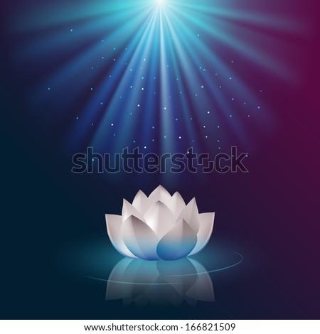 White lotus flower - stock photo