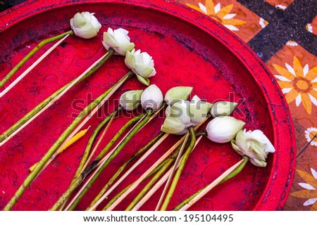 White lotus flowers on red tray, offerings in Buddhist temple in northern Thailand - stock photo