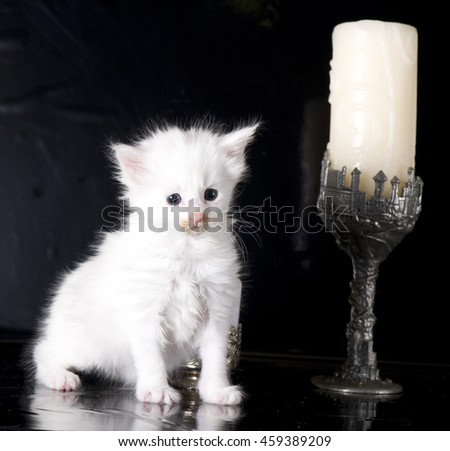 White maine coon kitten with candle on dark background - stock photo
