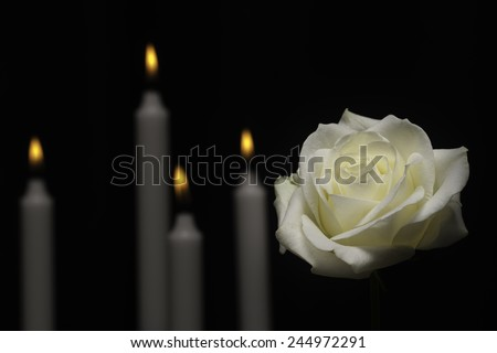 White memorial rose with candles - stock photo