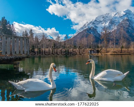 White mountain top and lake with a couple swans - stock photo