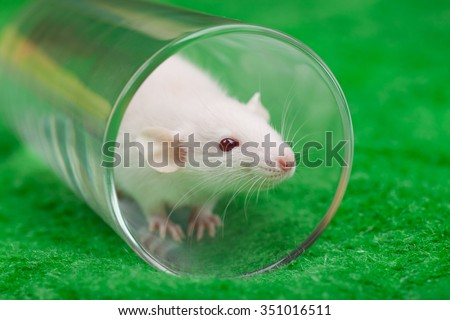 white mouse in transparent glass on a green grass background - stock photo
