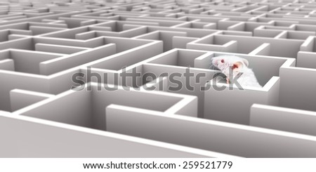 White Mouse in White maze looking over walls - stock photo