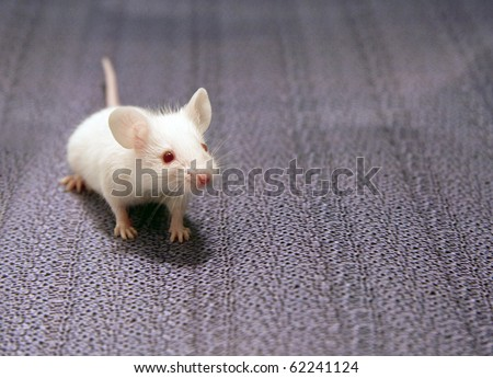 white mouse sitting on a grey background - stock photo