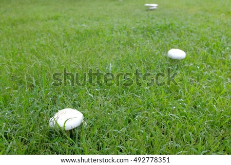 White mushrooms in the park