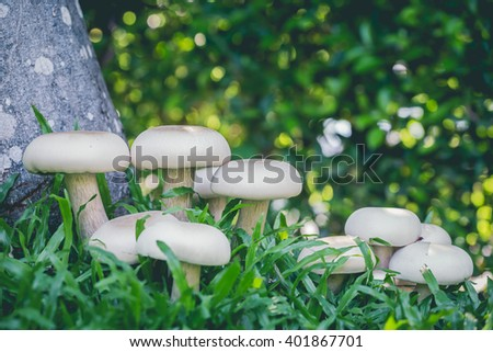 White mushrooms vegetables and herbs to cook with natural ingredients is a fungus in the fall. - stock photo