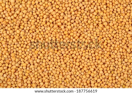 White mustard seeds as background texture - stock photo