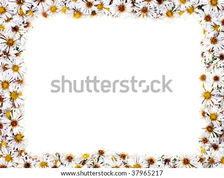White nature chamomile flower background frame
