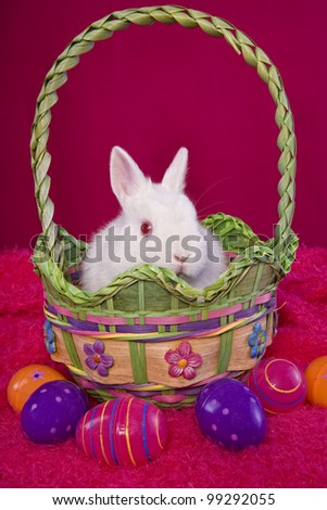 White Netherland Dwarf Bunny Rabbit on hot pink background in Easter basket with colorful easter eggs - stock photo