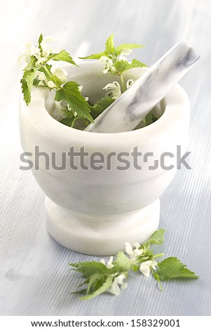 White nettle-plant medicinal - stock photo