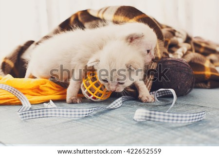 White newborn kittens in a plaid blanket. Sweet adorable tiny kittens on a serenity blue wood background play with cat toy and ribbon. Small cats. Funny kittens crawling and meowing - stock photo