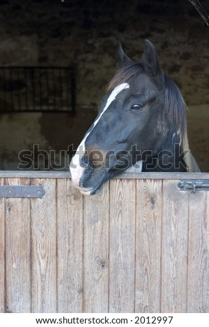 White nosed horse in stable - stock photo